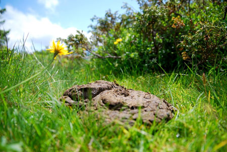 Limpiarse sin Papel Higiénico en el campo - tvjoern para Pixabay.com