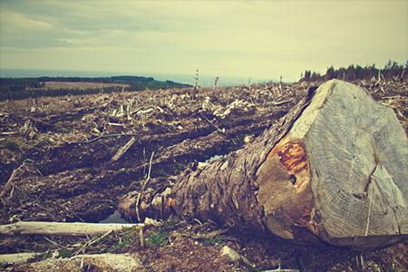 El papel higiénico es una de las causas de la deforestación - Picography para Pixabay