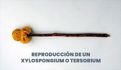 Tersorio o xylospongio romano